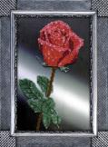 Вышивка бисером Роза